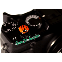 M.T.S. Bug-O-L Orange M9...